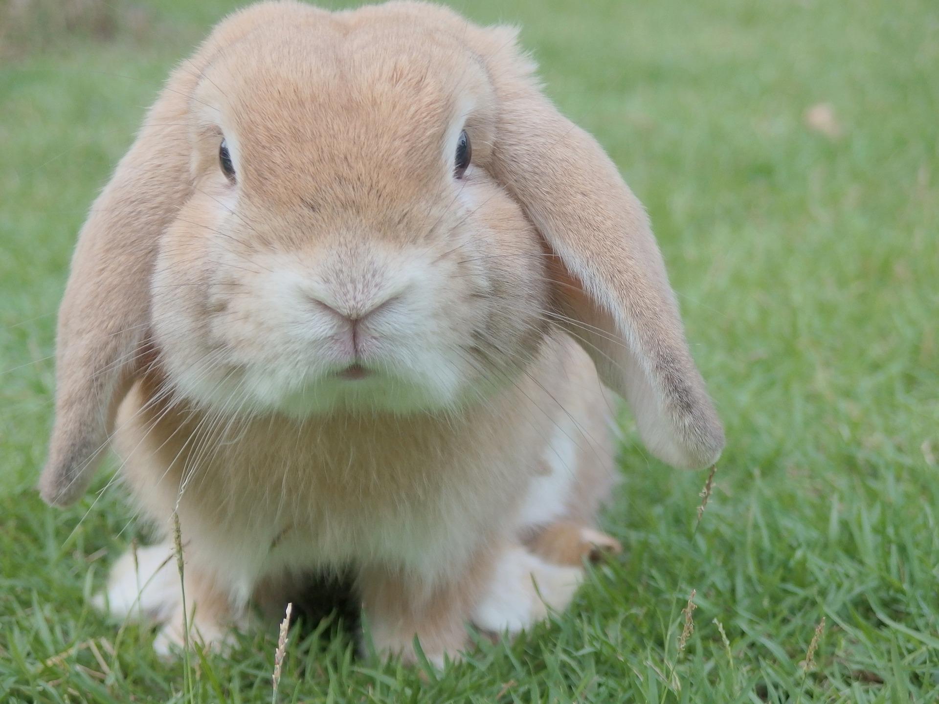 賃貸アパートでウサギを飼いたい人が気を付けるべきポイント